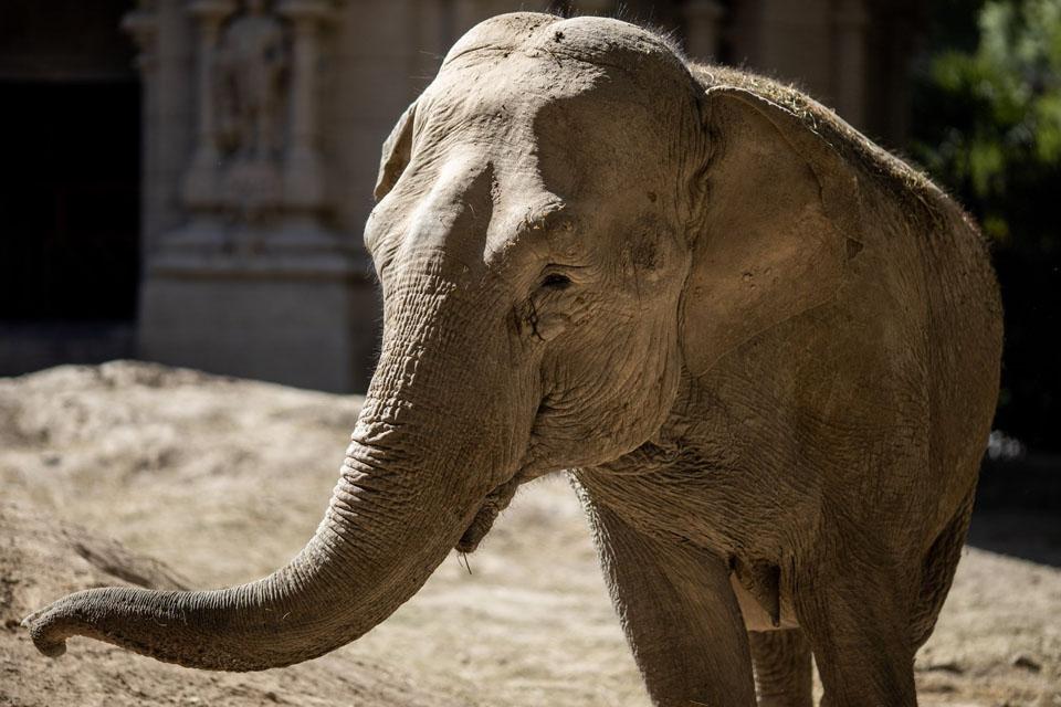 Mara es una elefanta liberada