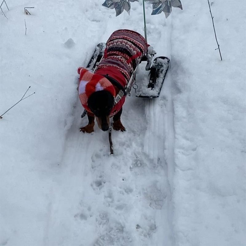 Molly esquís