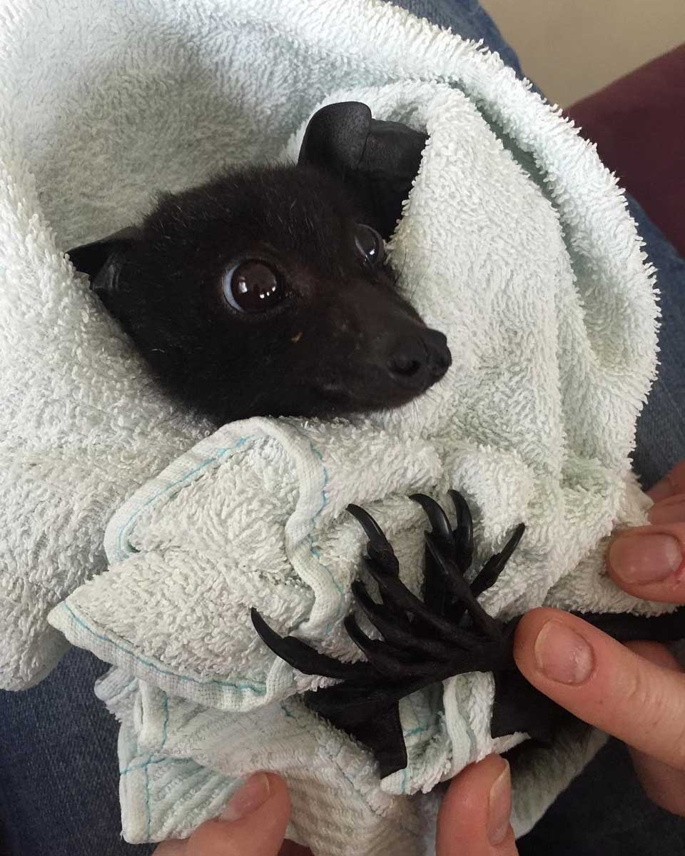 Murciélago recibe protección