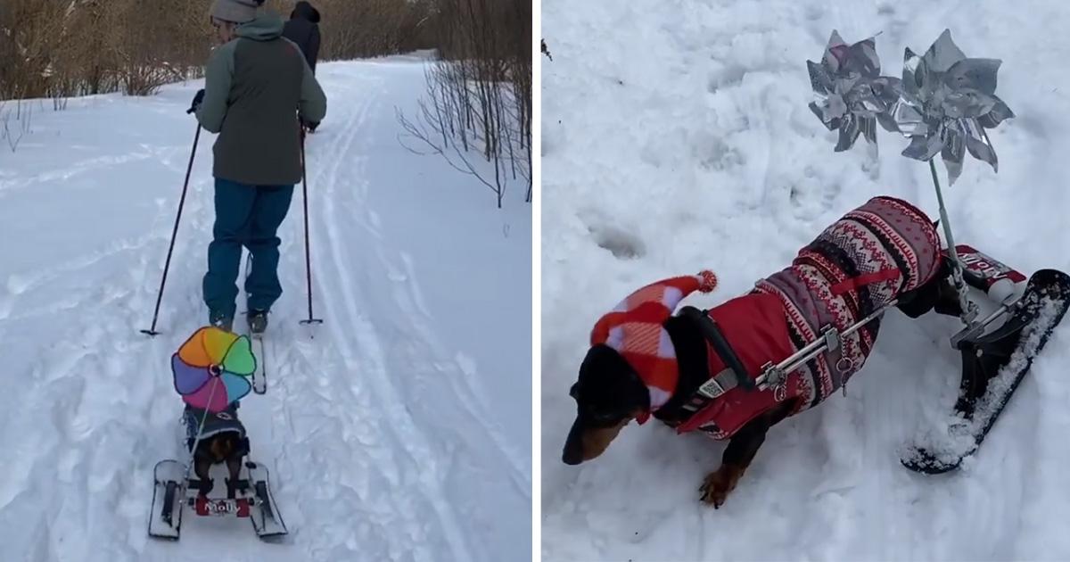 Perrita discapacitda usa esquís nieve