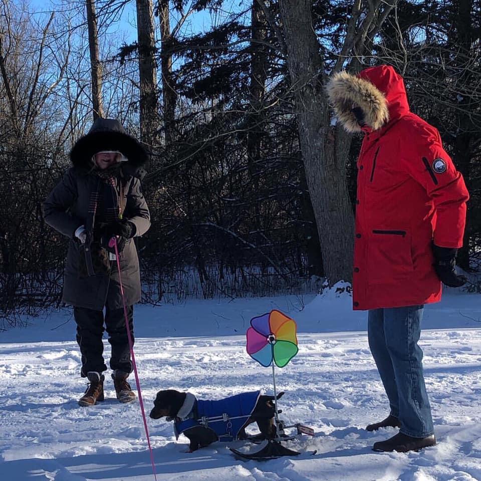 Perrita en la nieve