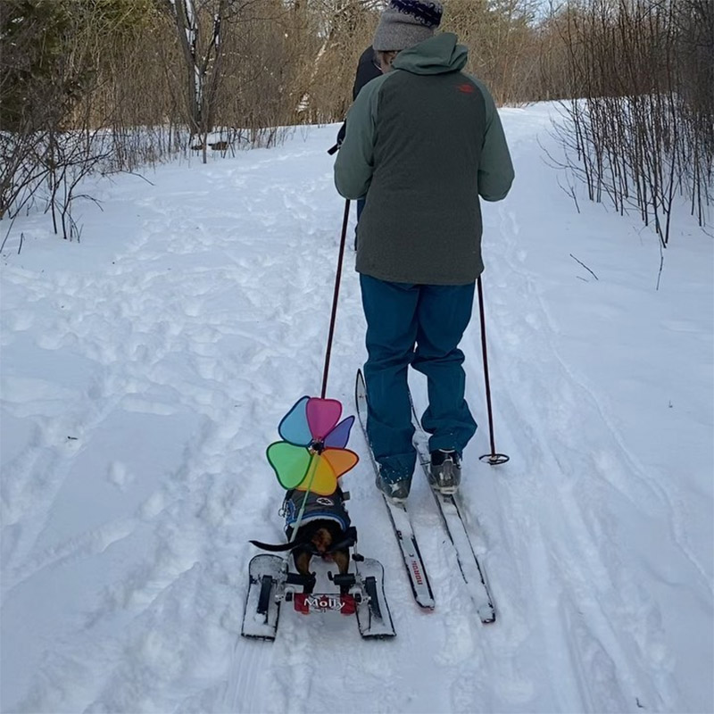 Perrita esquís