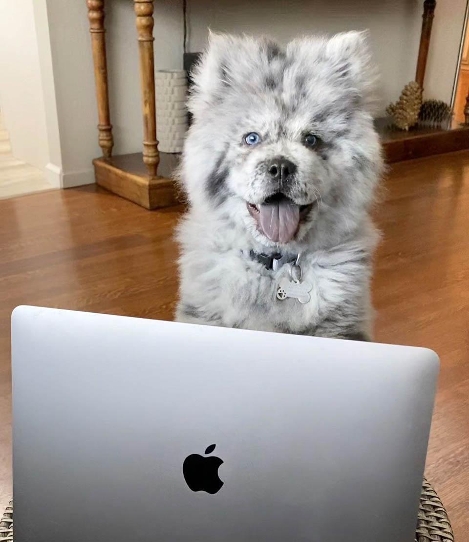 Perrito y laptop