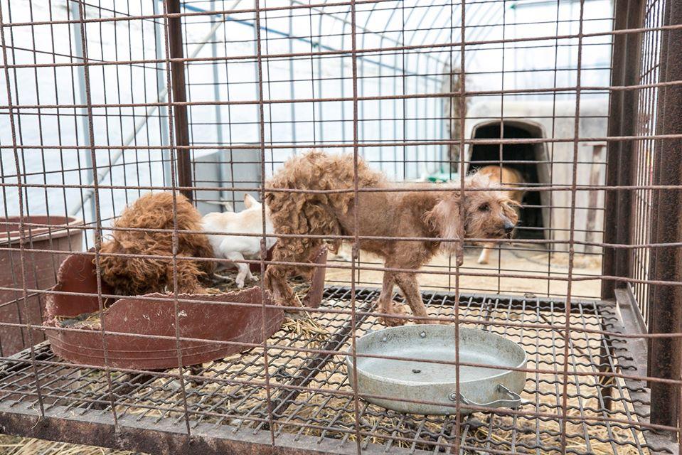 Perritos en jaulas