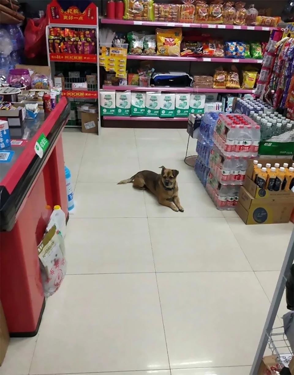 Perro espera dueño Wuhan