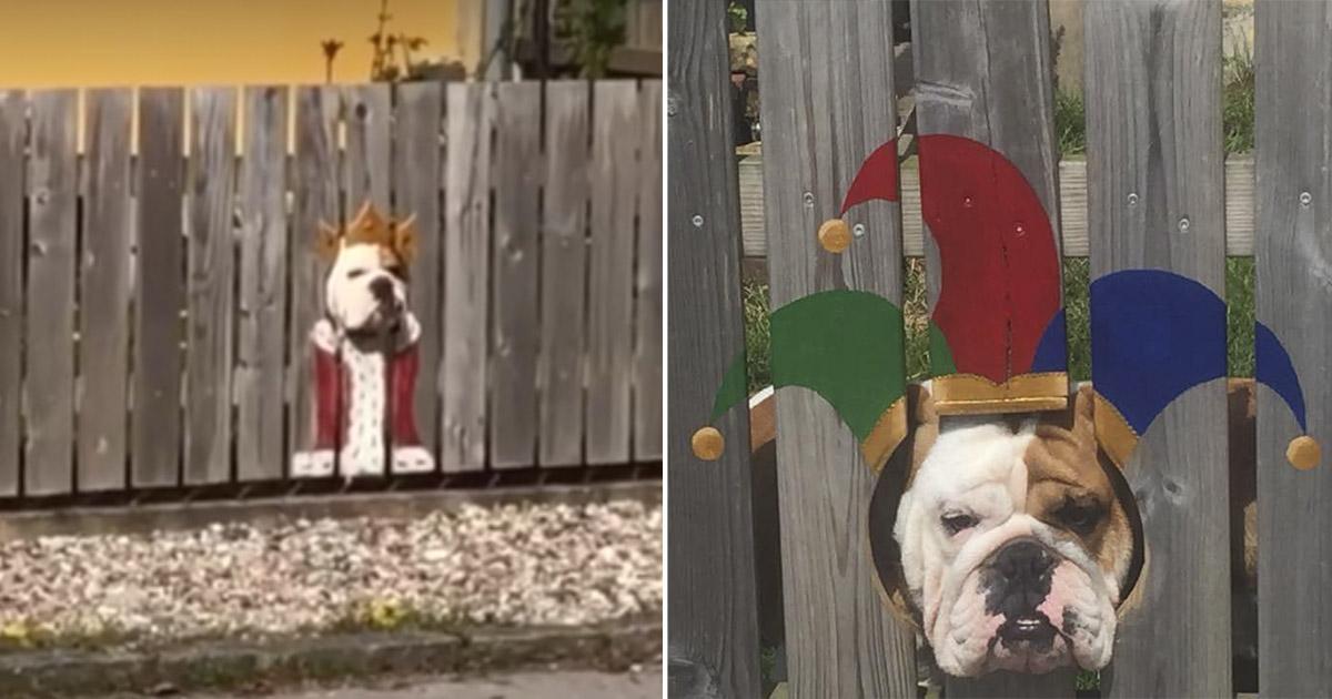 Perro mira a las personas a través de un agujero