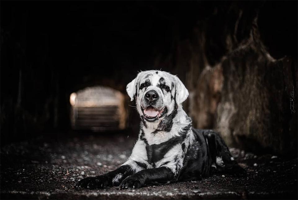 Perro negro cambia