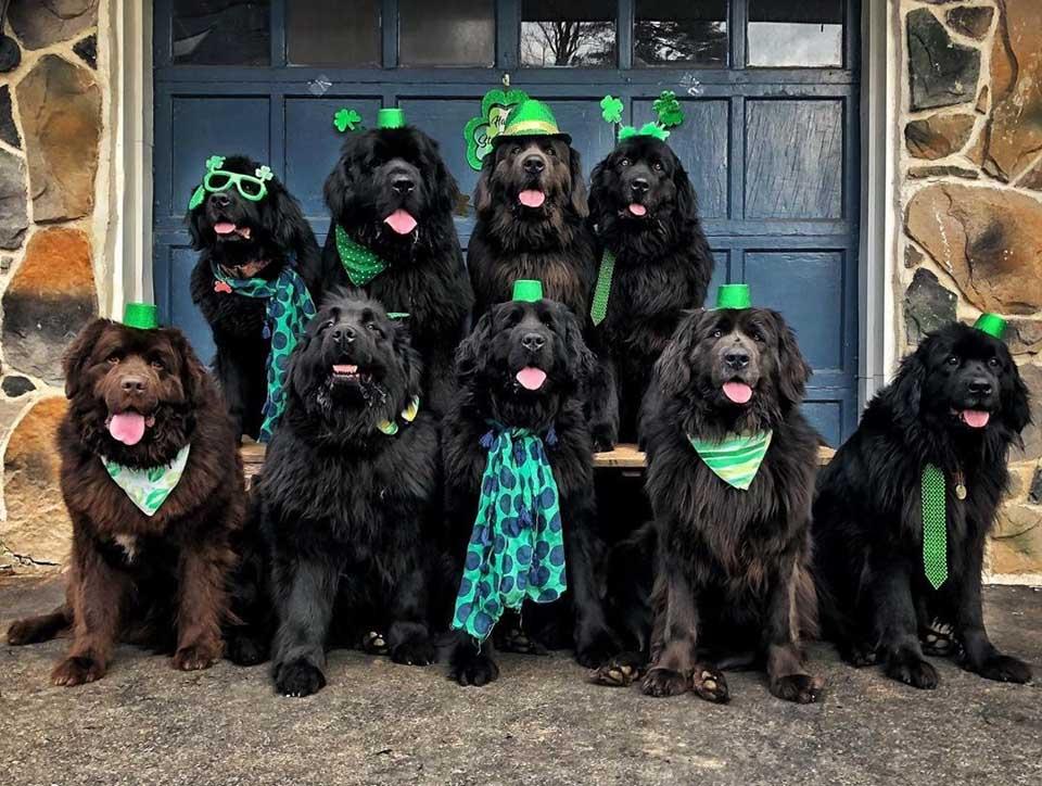 Perros con atuendos especiales
