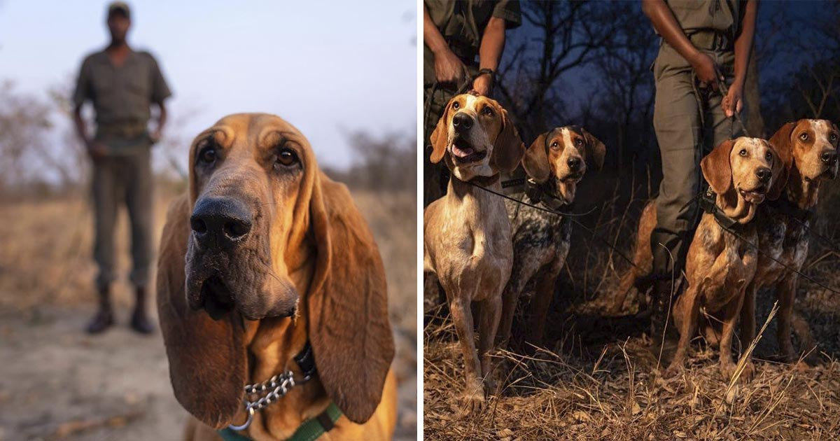 Perros entrenados para combatir caza furtiva