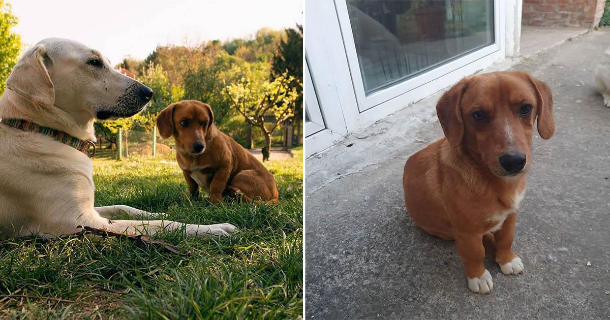 Perros salen a jugar y vuelven con nuevo hermano