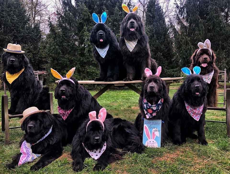 Perros usan orejas de conejo