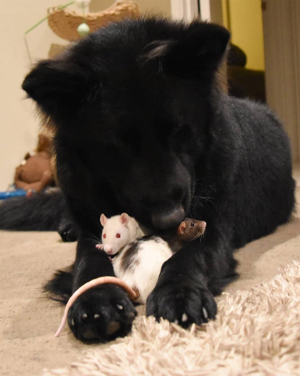 Ratas y Nuka