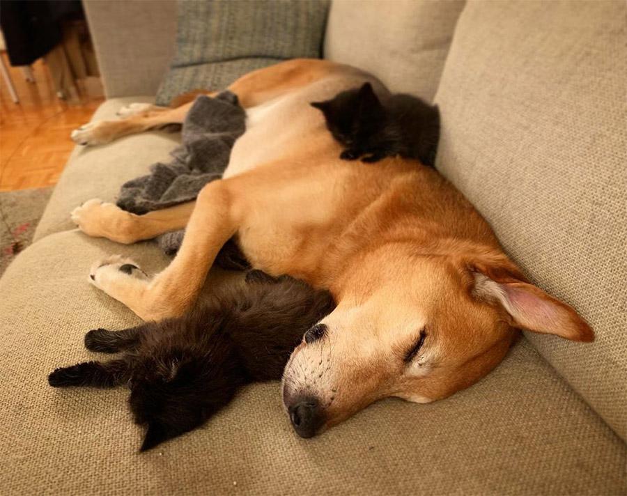 Raylan cuida gatitos