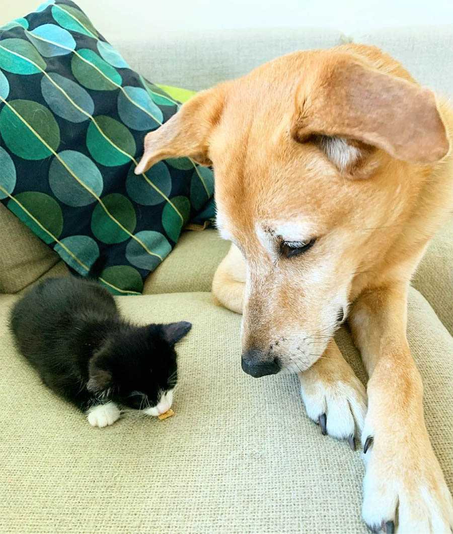 perro cuida gatito