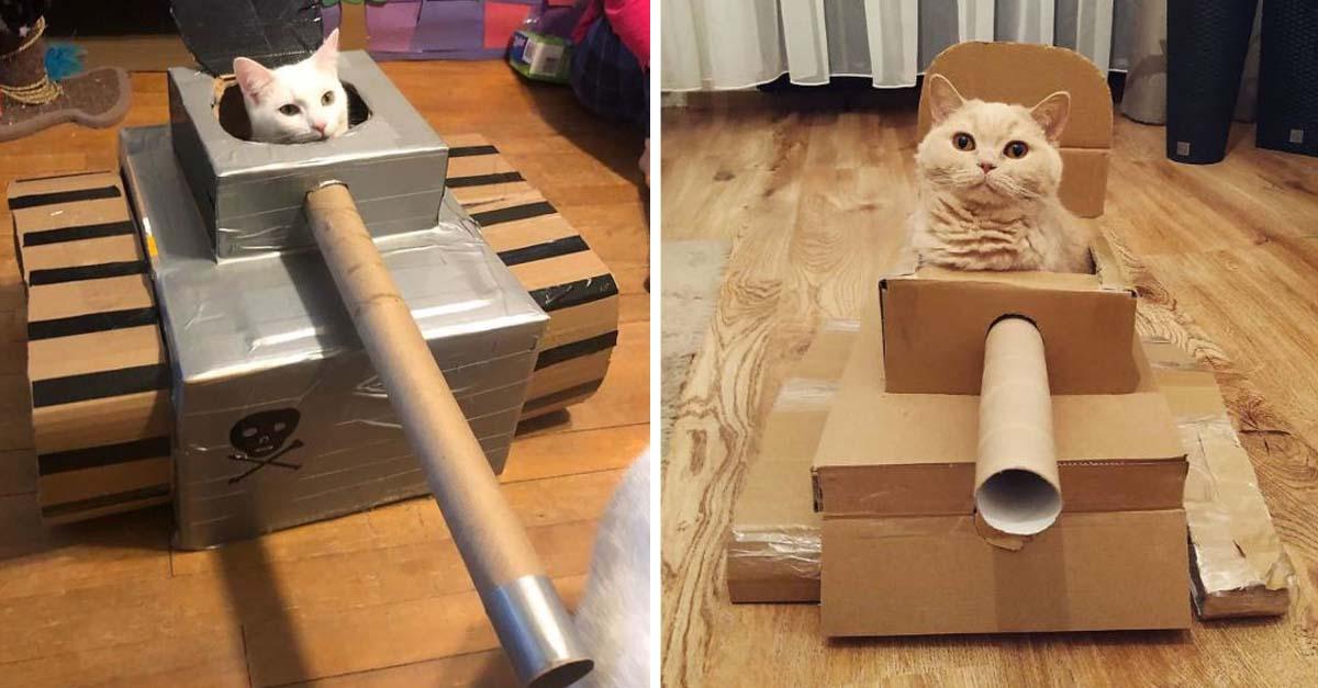Tanques de cartón para gatos