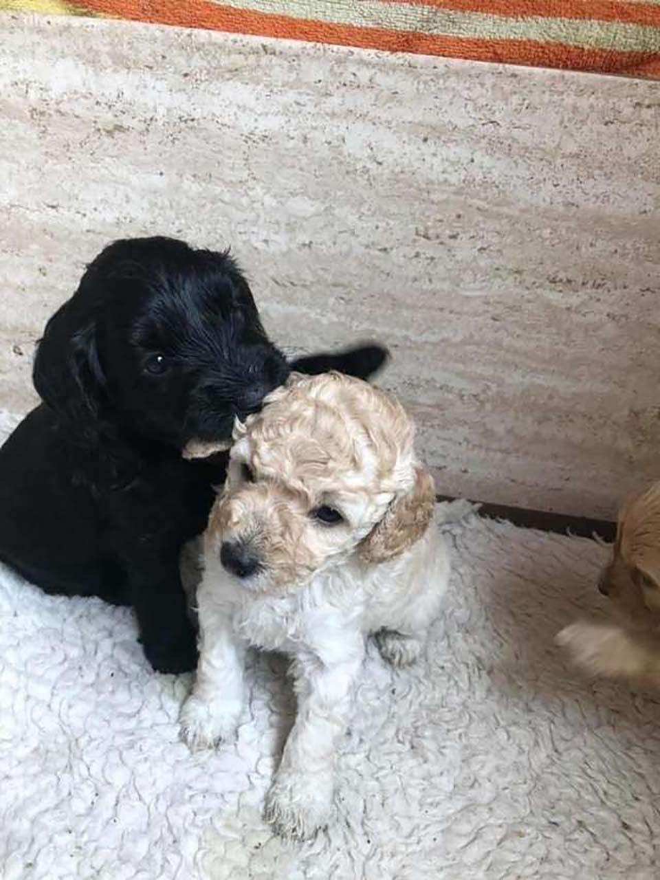 dos cachorritos