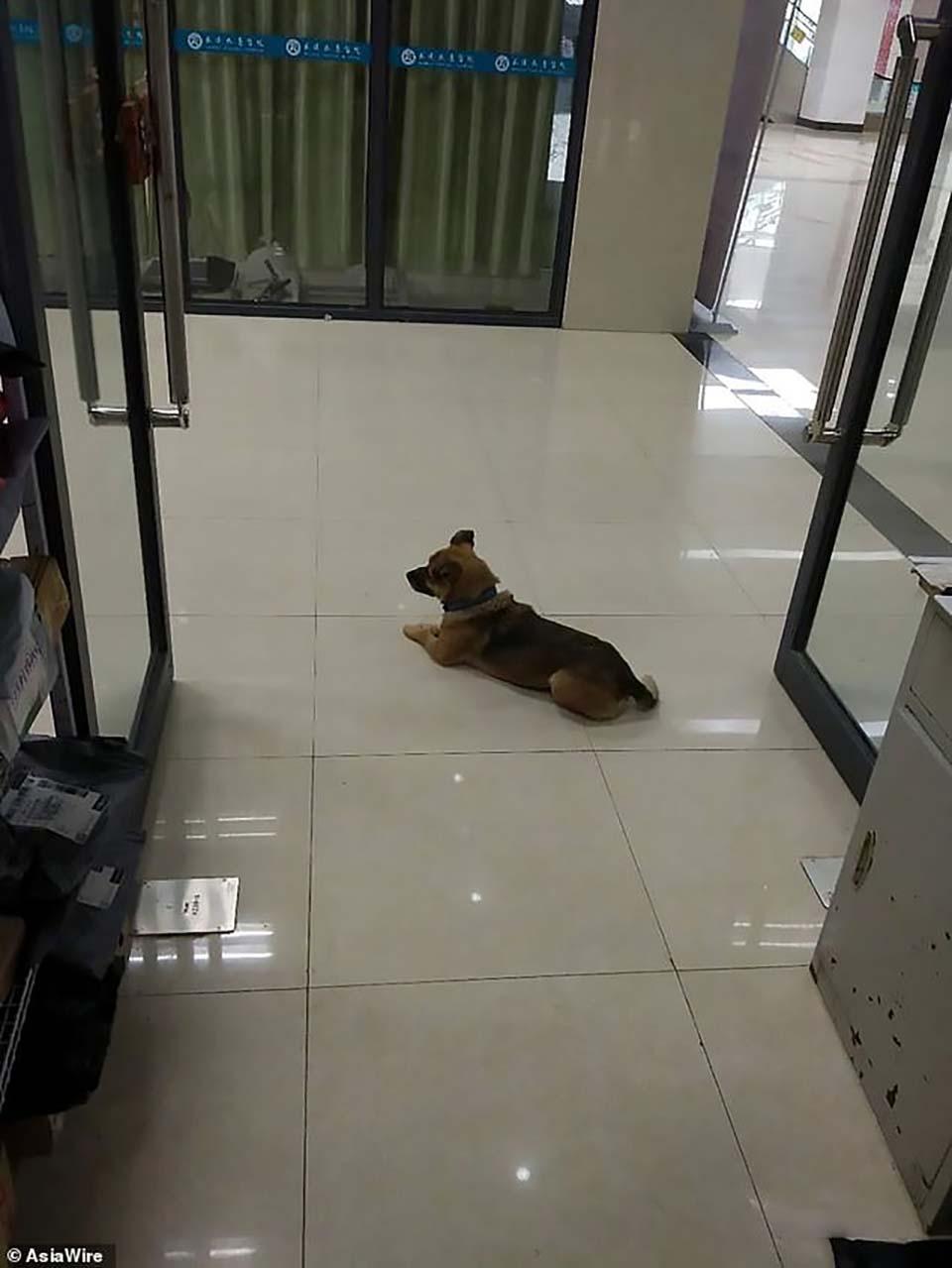 perro espera en el pasillo