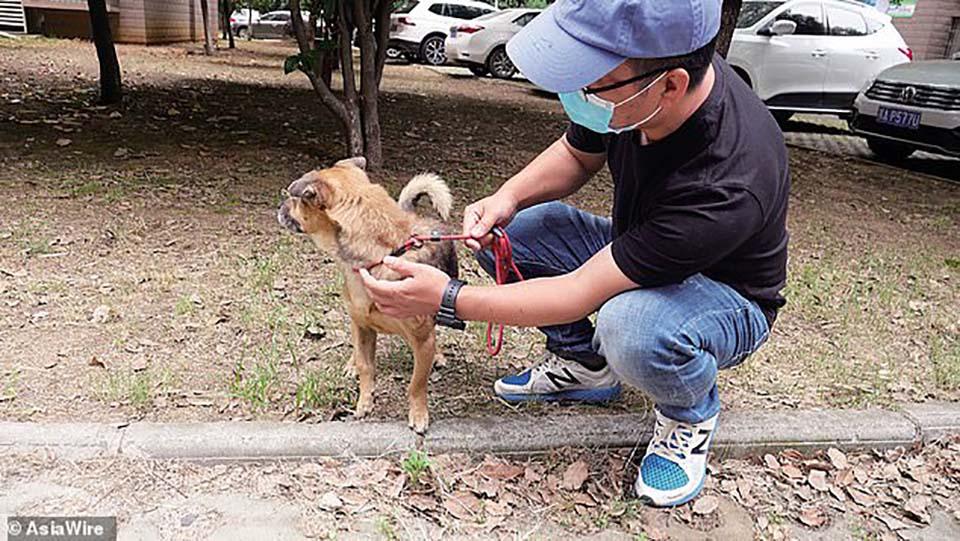 perro leal en Wuhan
