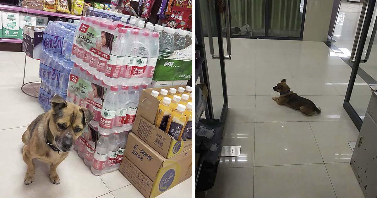perro leal espera en el pasillo del hospital a su dueño