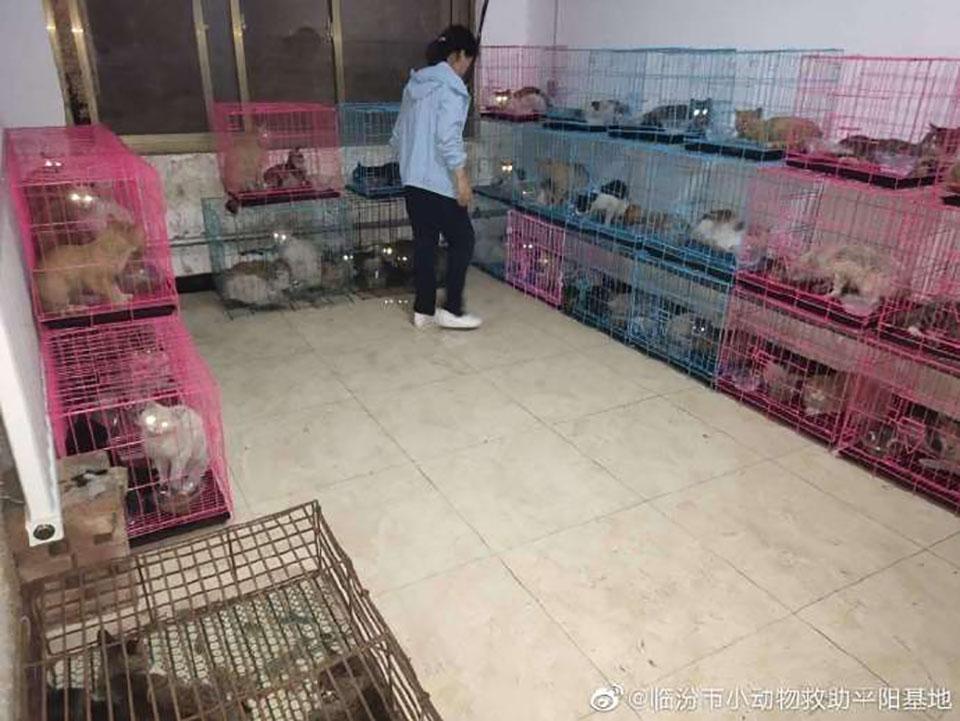 700 gatos rescatados