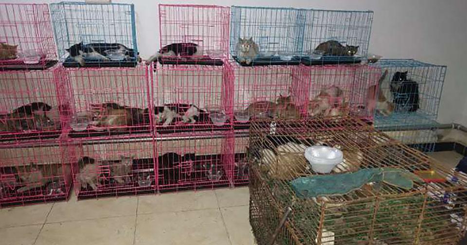 700 gatos robados rescatados China