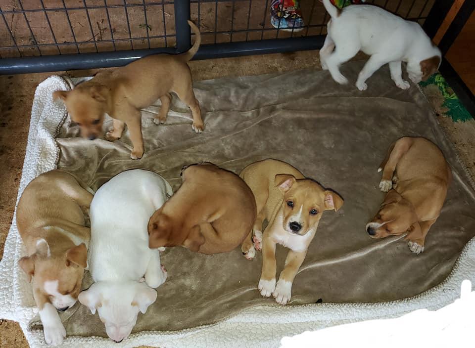 Cachorros recuperados