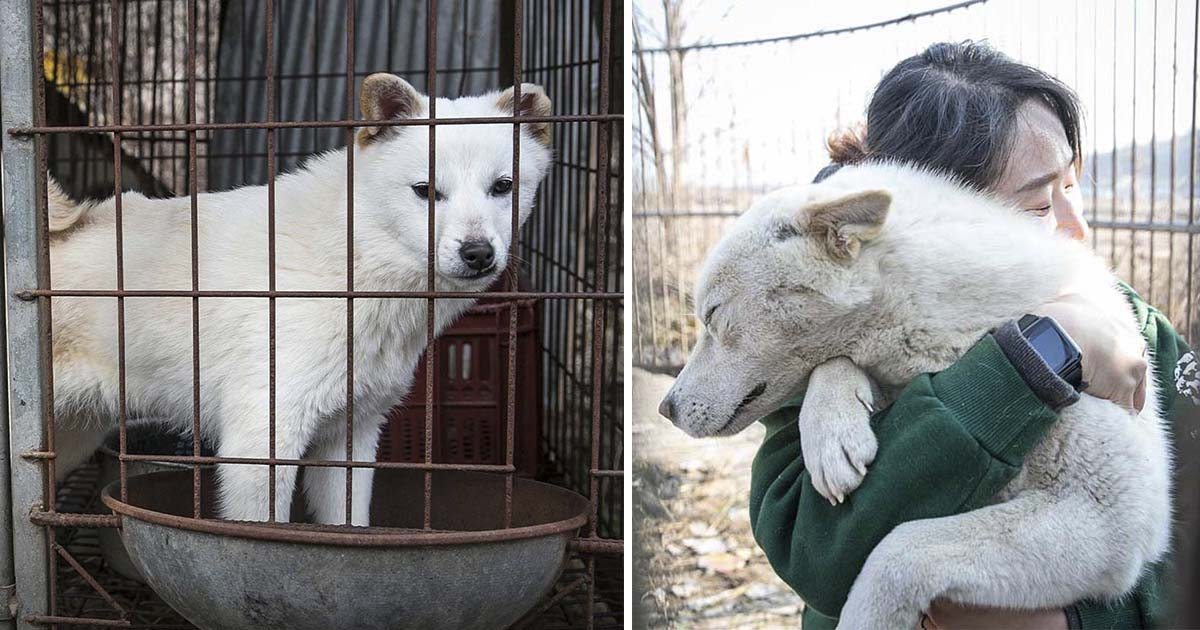 China prohíbe el consumo de carne de perro