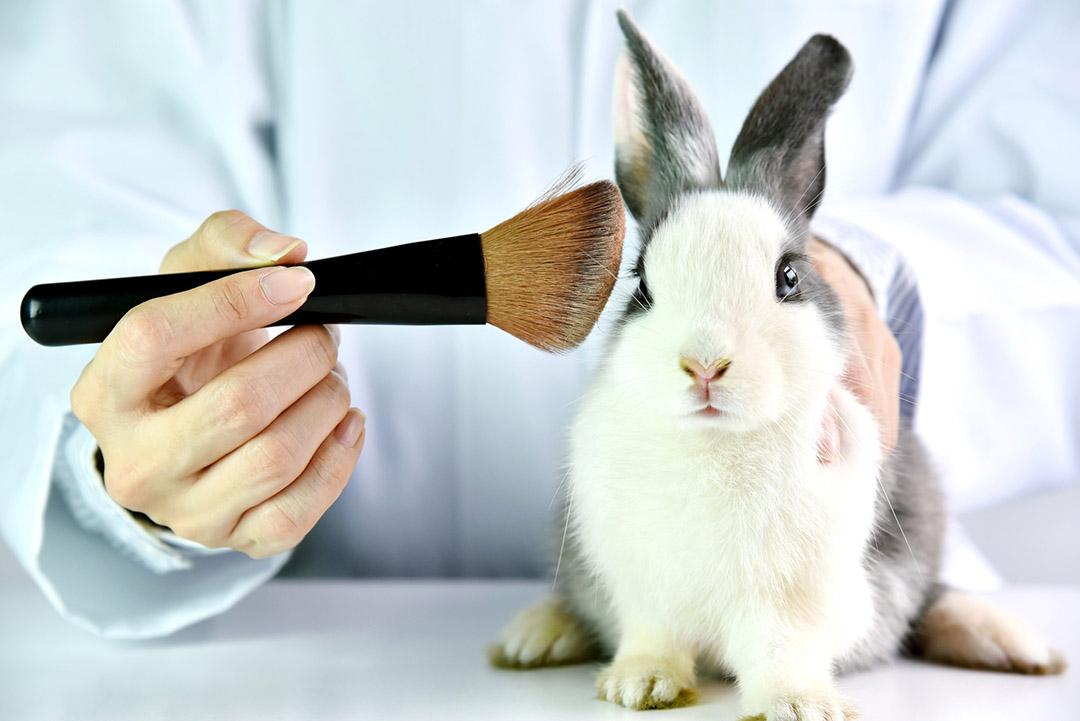Conejo usado para pruebas laboratorio
