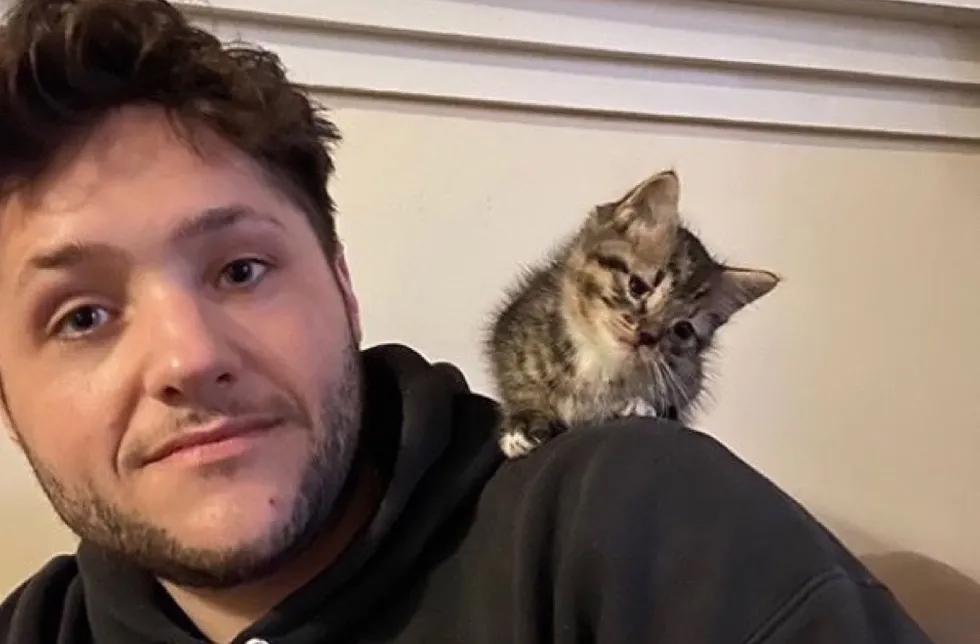 Gatito en hombros
