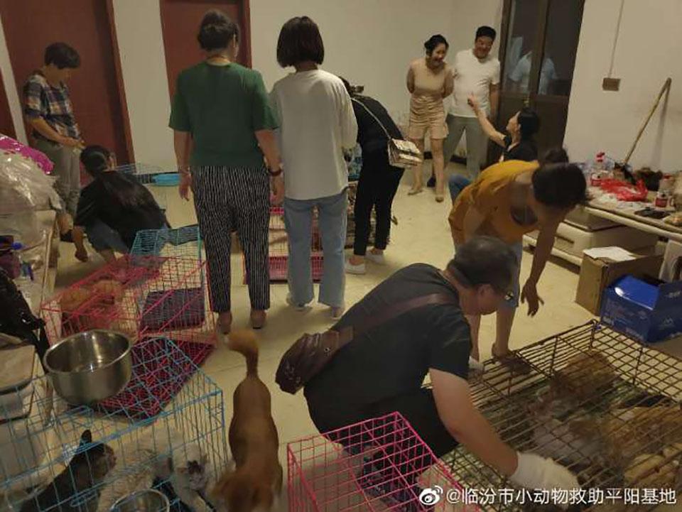 Gatos rescatados Linfen China
