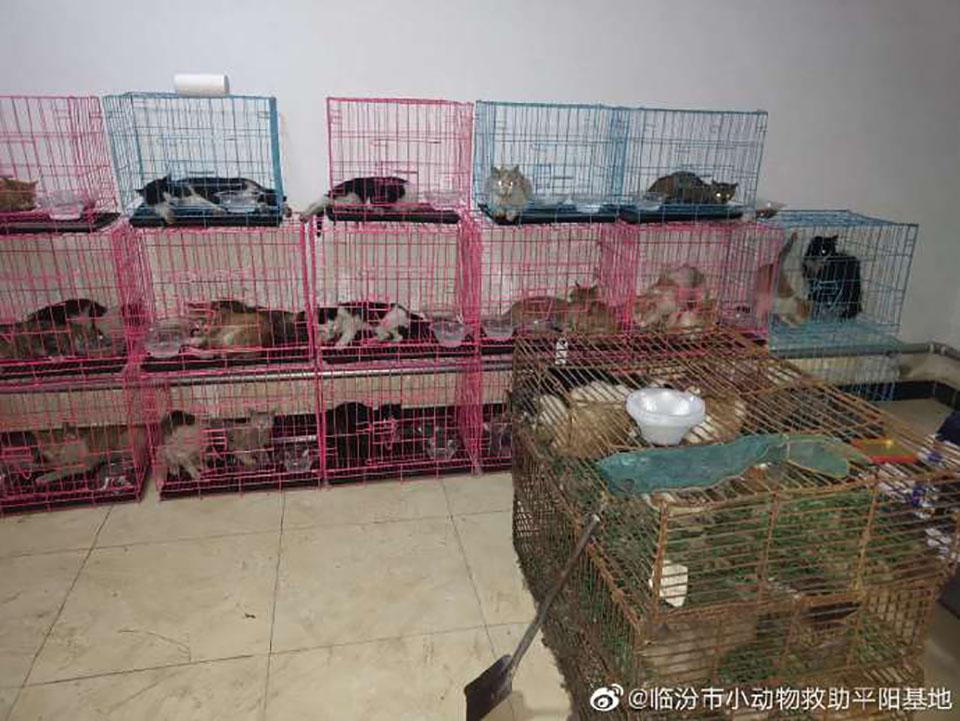 Gatos robados rescatados