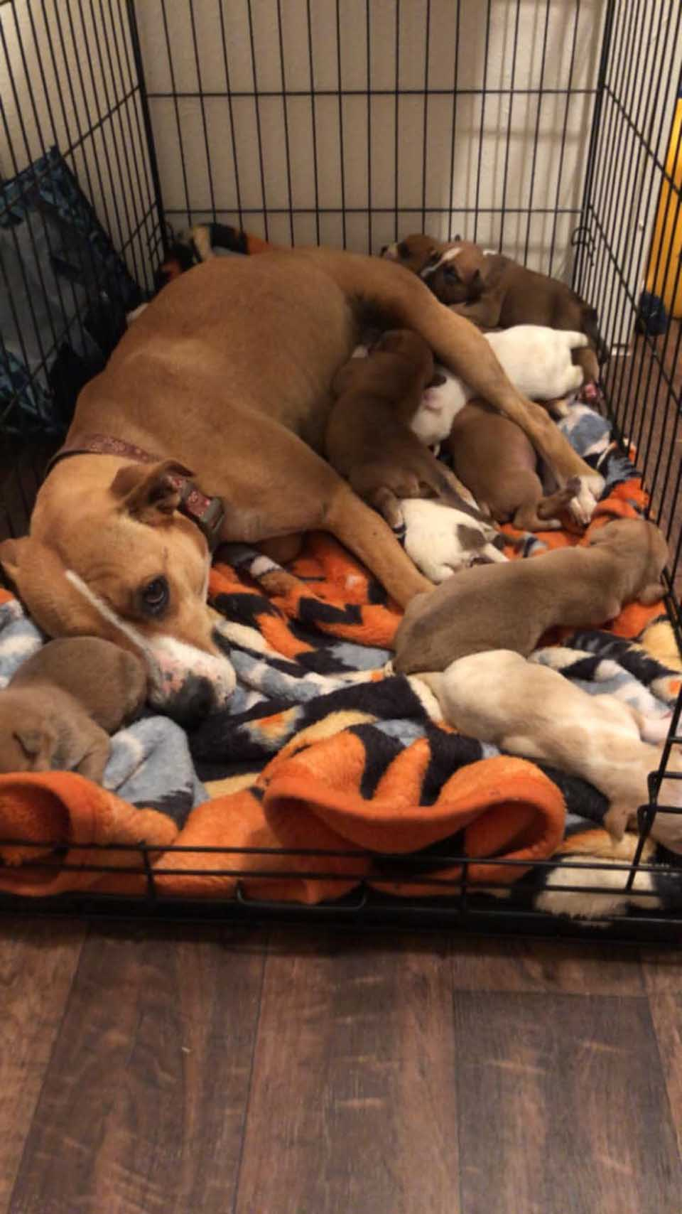 Mamá con sus cachorros