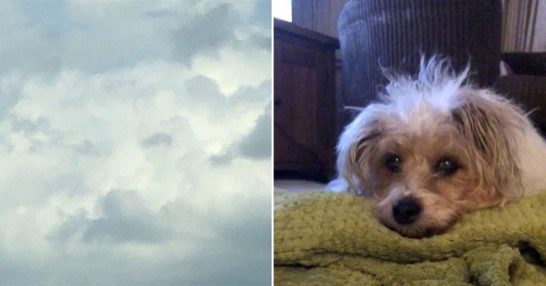 Mujer desconsolada ve la cara de su perro en el cielo horas después de su fallecimiento