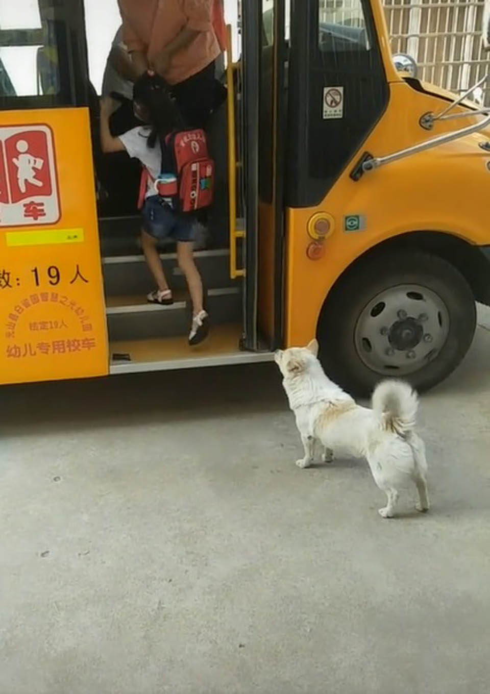 Niña sube al autobús y perrito la observa
