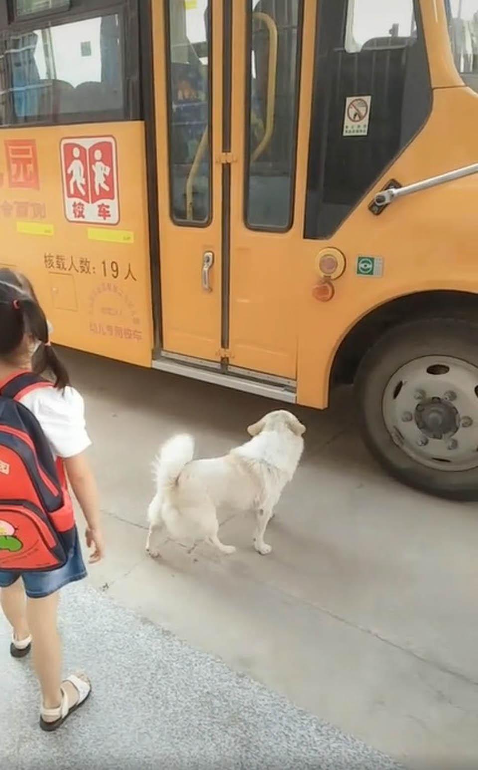 Niña y perrito esperan el autobús