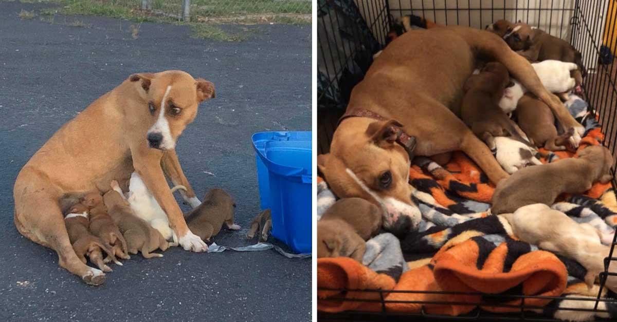 Perrita y sus cachorros son rescatados luego de ser desamparados