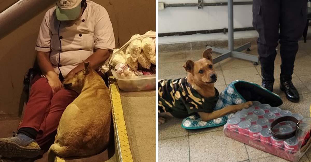 Perrito acompaña a vendedora en crisis por el coronavirus