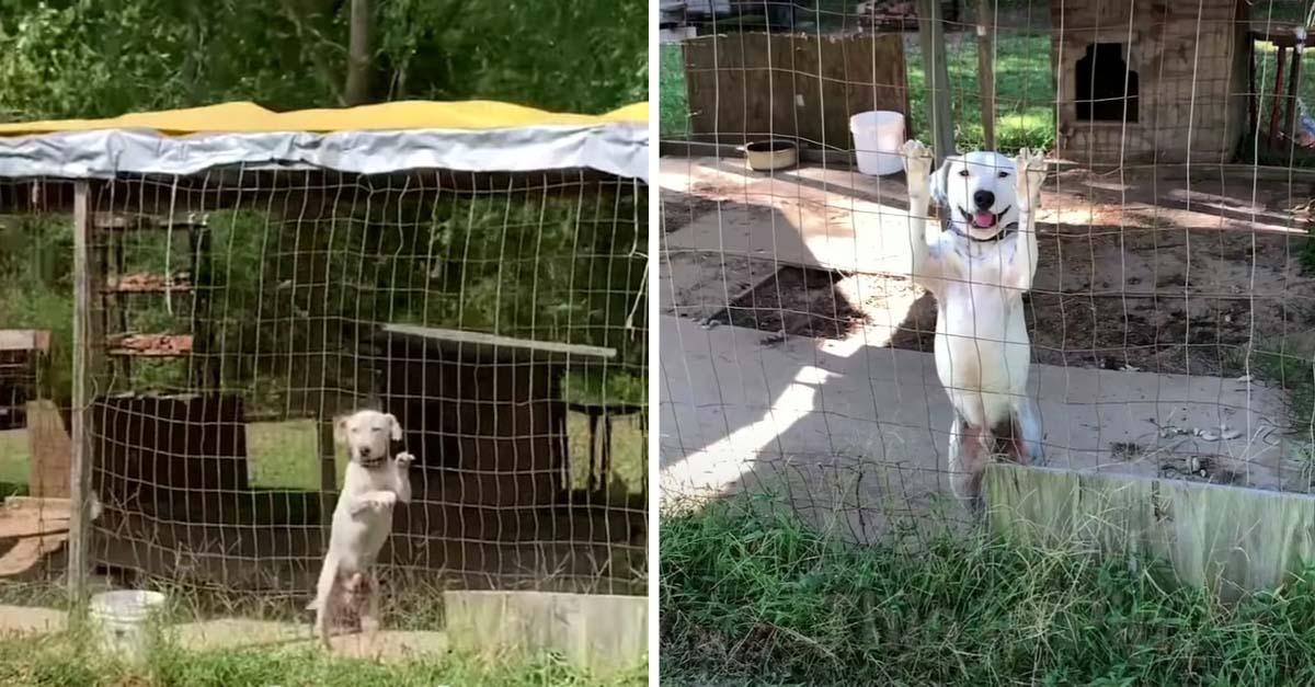 Perrito atrapado en una jaula suplicaba ayuda