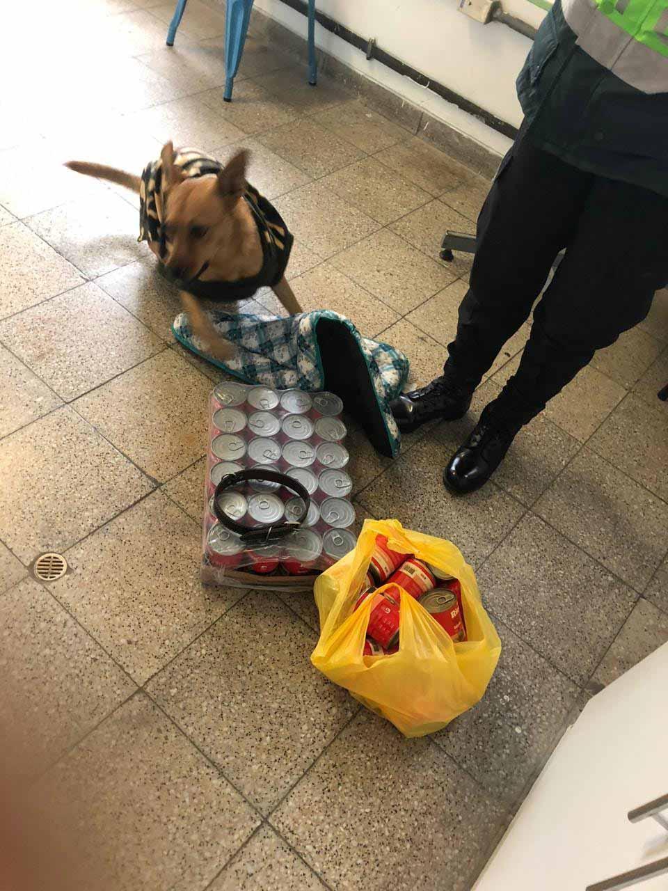 Perrito con donaciones