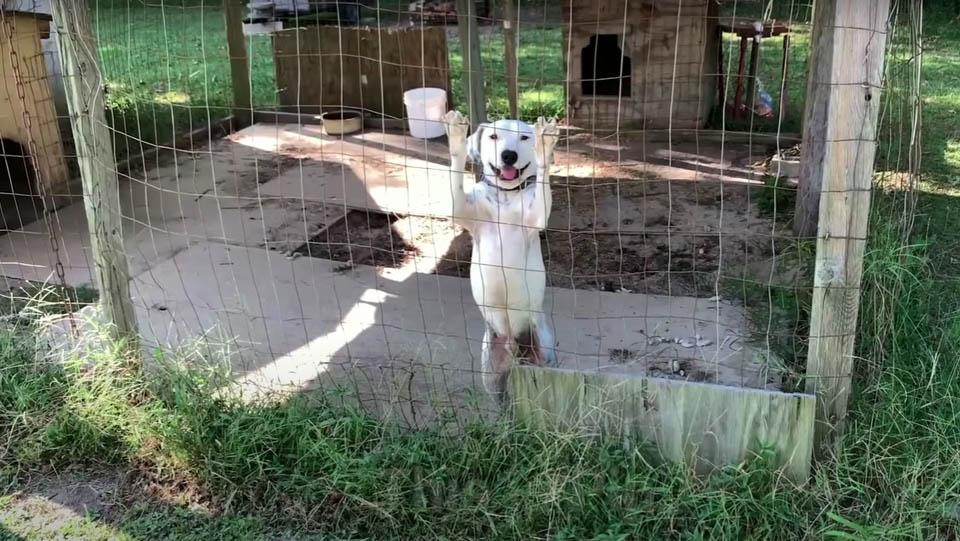 Perrito fue rescatado en una jaula