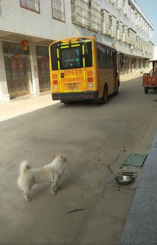 Perrito observa el autobús