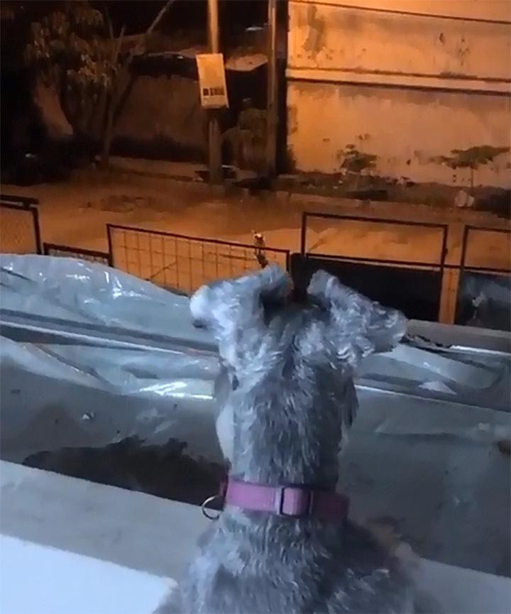 Perro Romeo Visitando