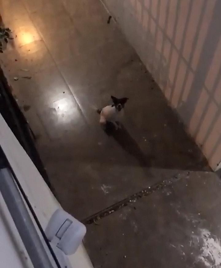 Perro Romeo enamorado