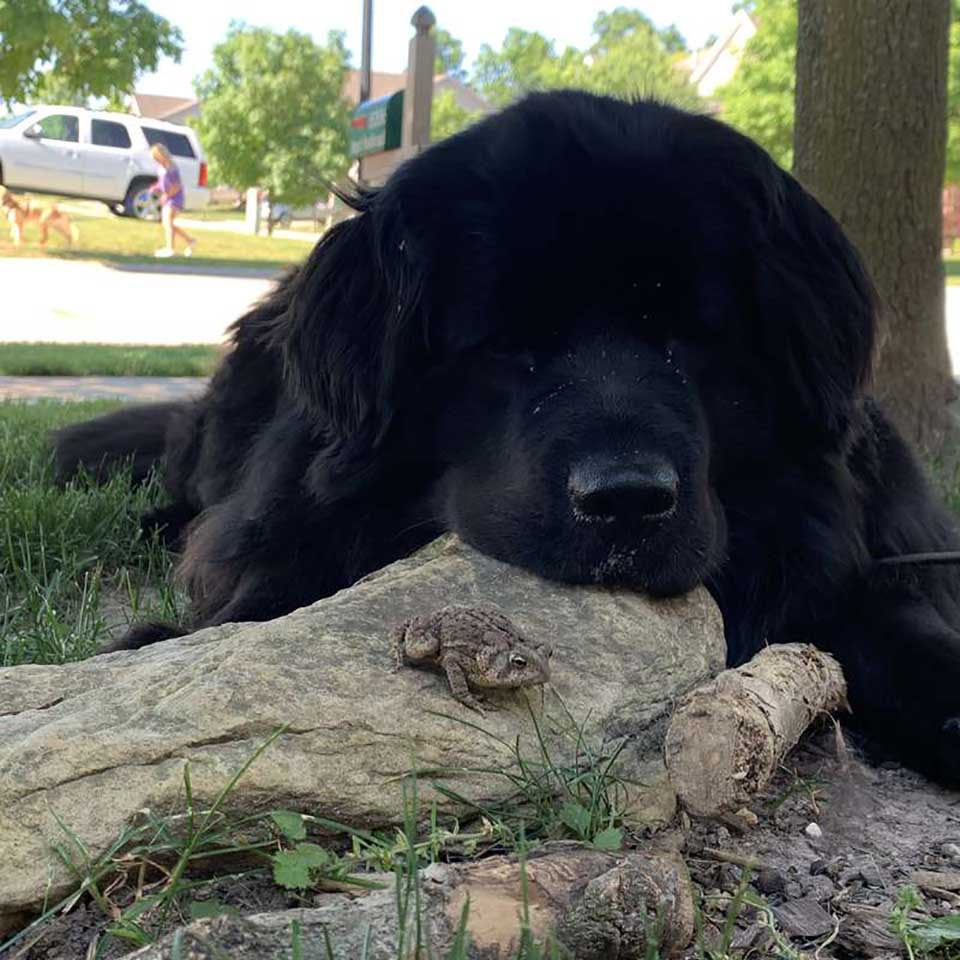 Perro es amigo de un sapo