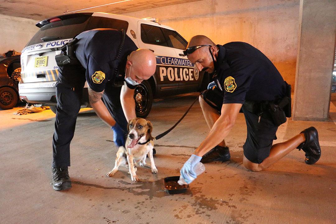 oficiales rompen auto