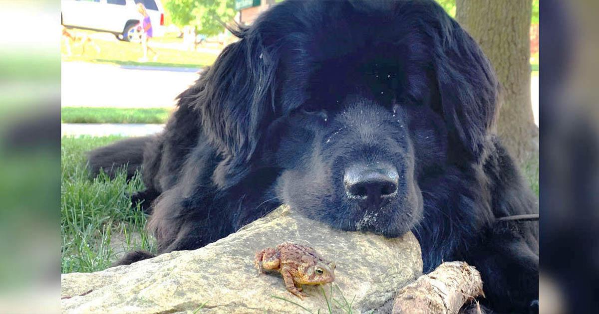 Perro y sapo se convierten en amigos