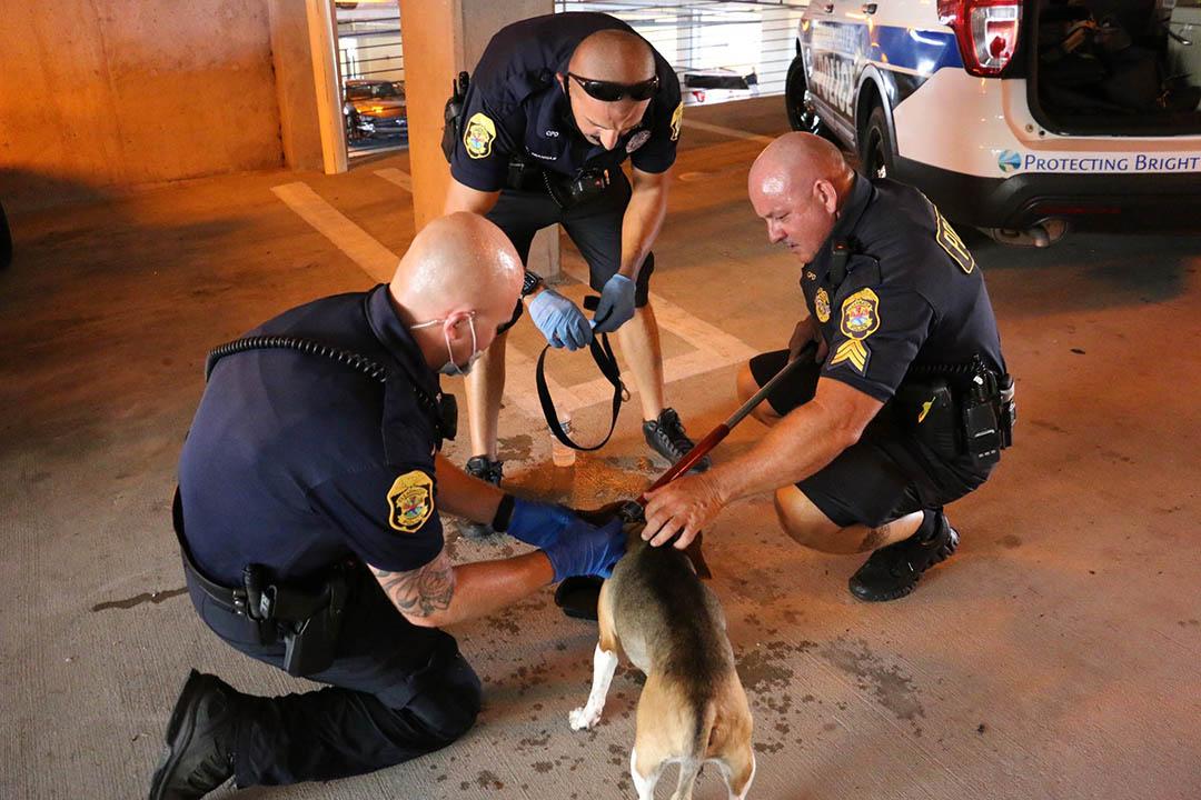 Rescatan perro que ladraba