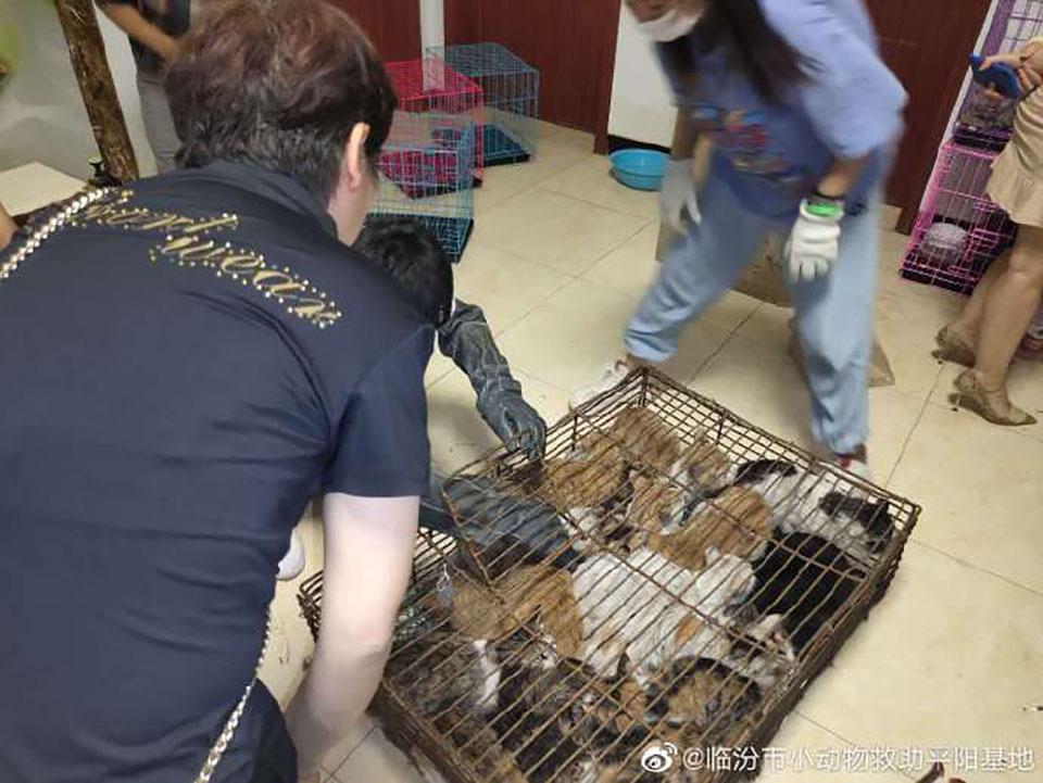Rescate 700 gatos
