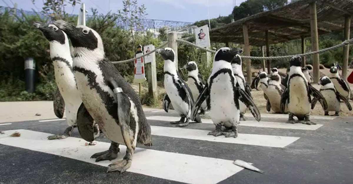 Zoológico encuentra hogar para los animales tras temor de eutanasia