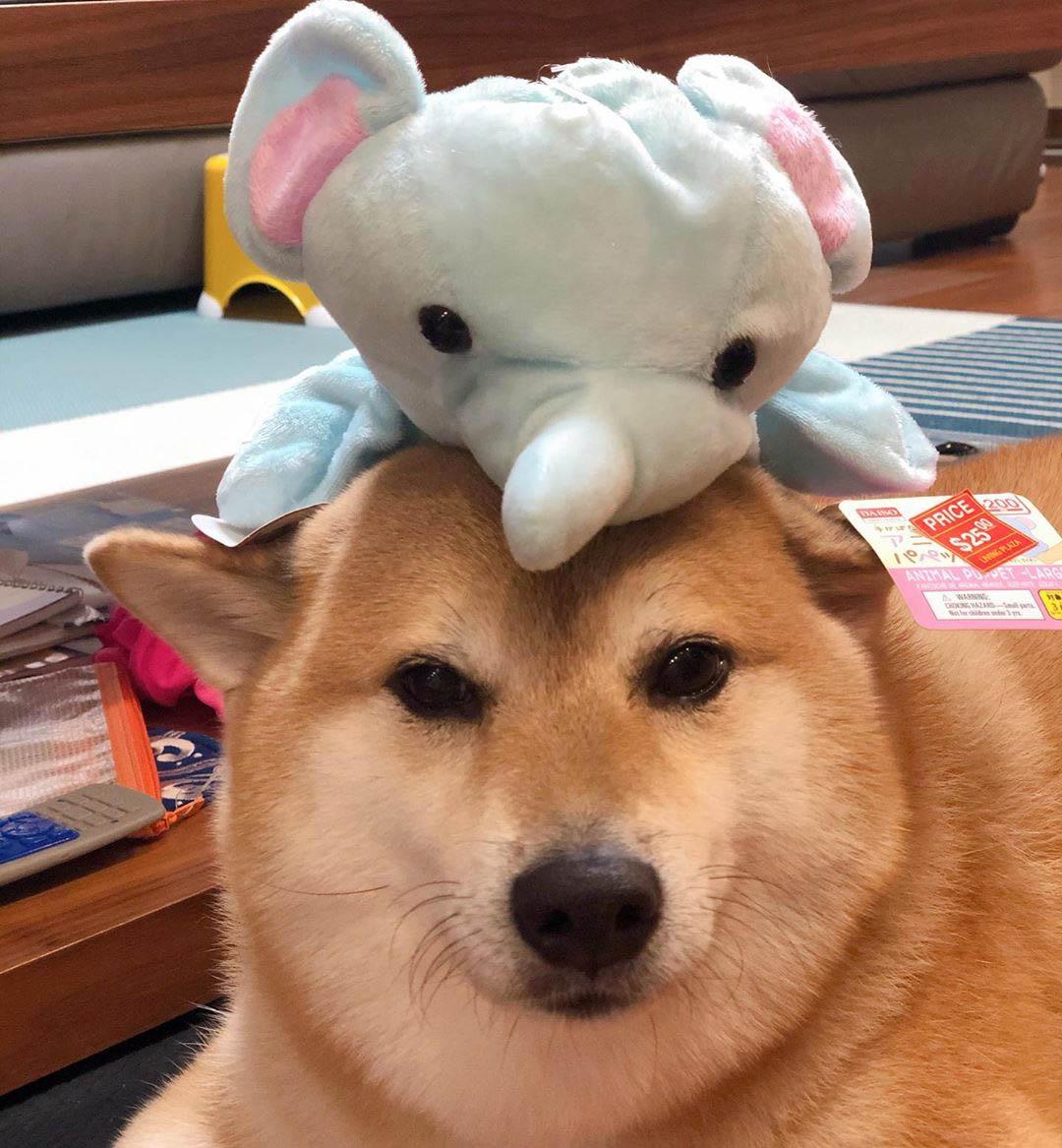 Balltze perro famoso